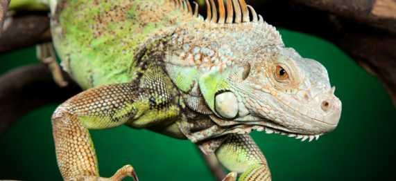 Exotics & Reptiles