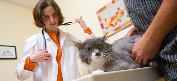 Preventive Care & Pet Wellness